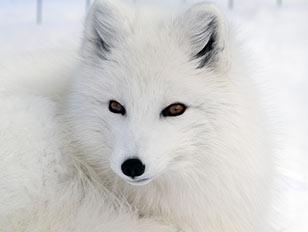 Arktis Expeditionen 2017