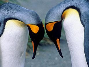 Sonnenfinsternis in der Antarktis