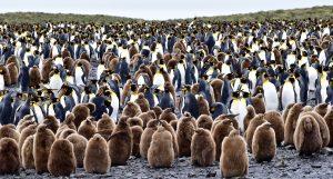 Pinguinfamilien