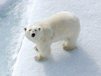 Expedition Russische Arktis