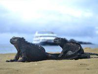 Cormorant & Meerechse auf Galapagos