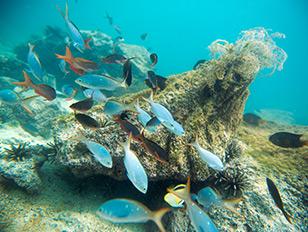 Galapagos_Unterwasser_Reina-Silvia-Voyager