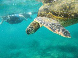 Reina-Silvia-Schnorcheln-Galapagos