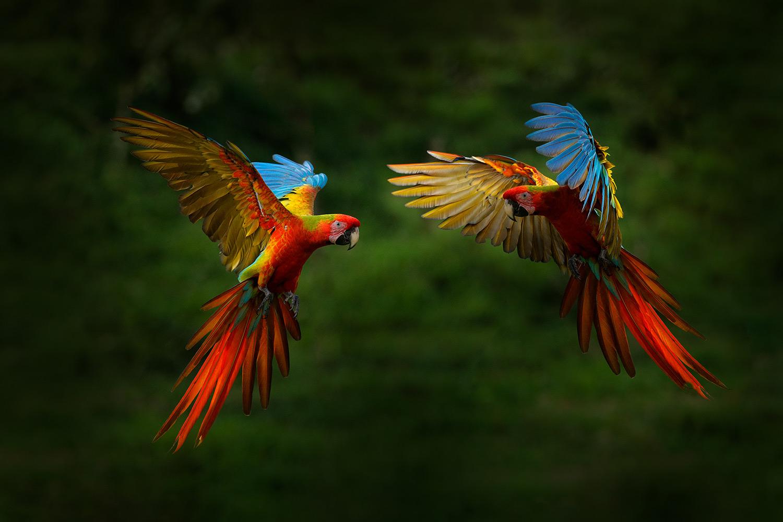 Amazonas Reisen