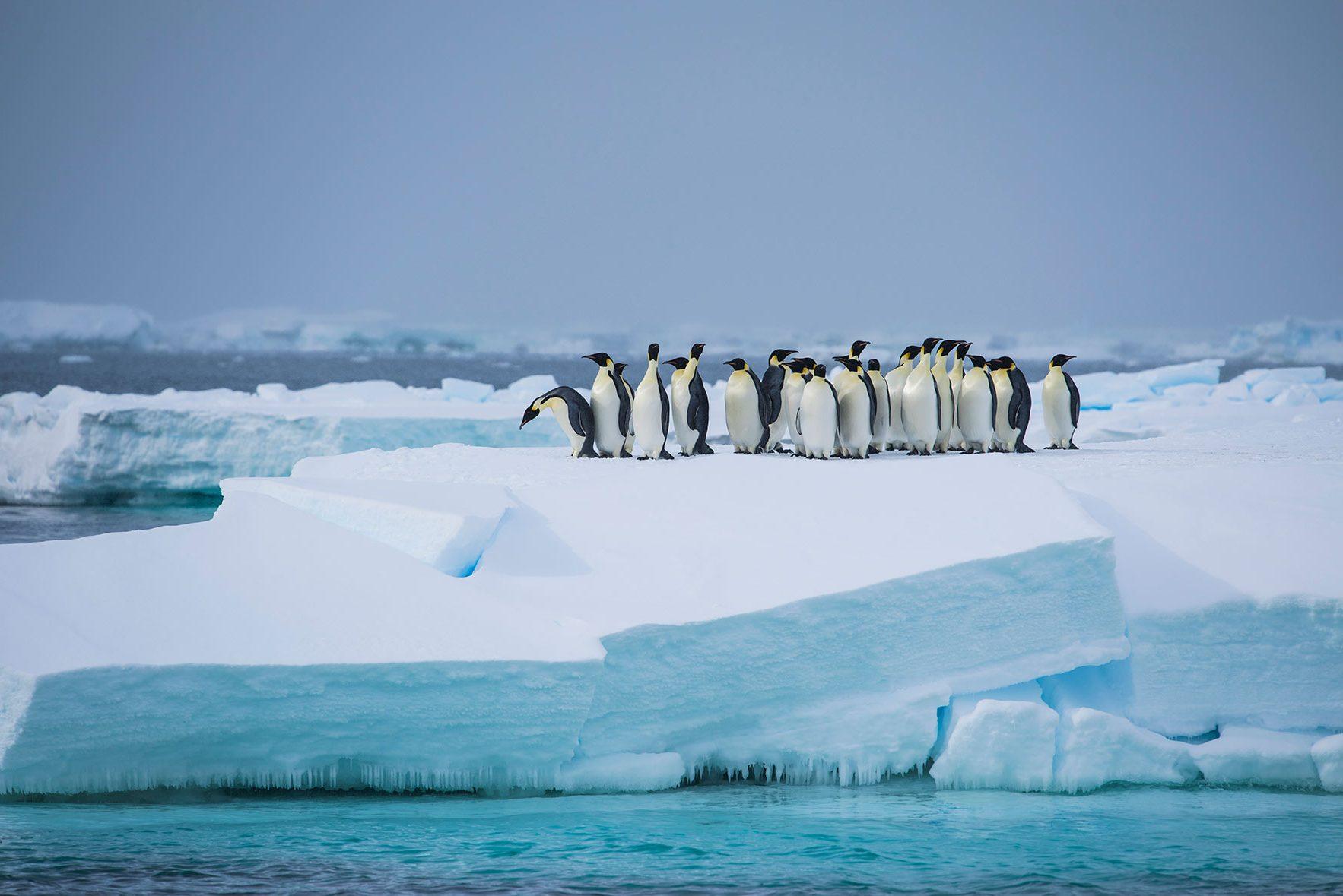 Antarktis Reisen 2020/2021