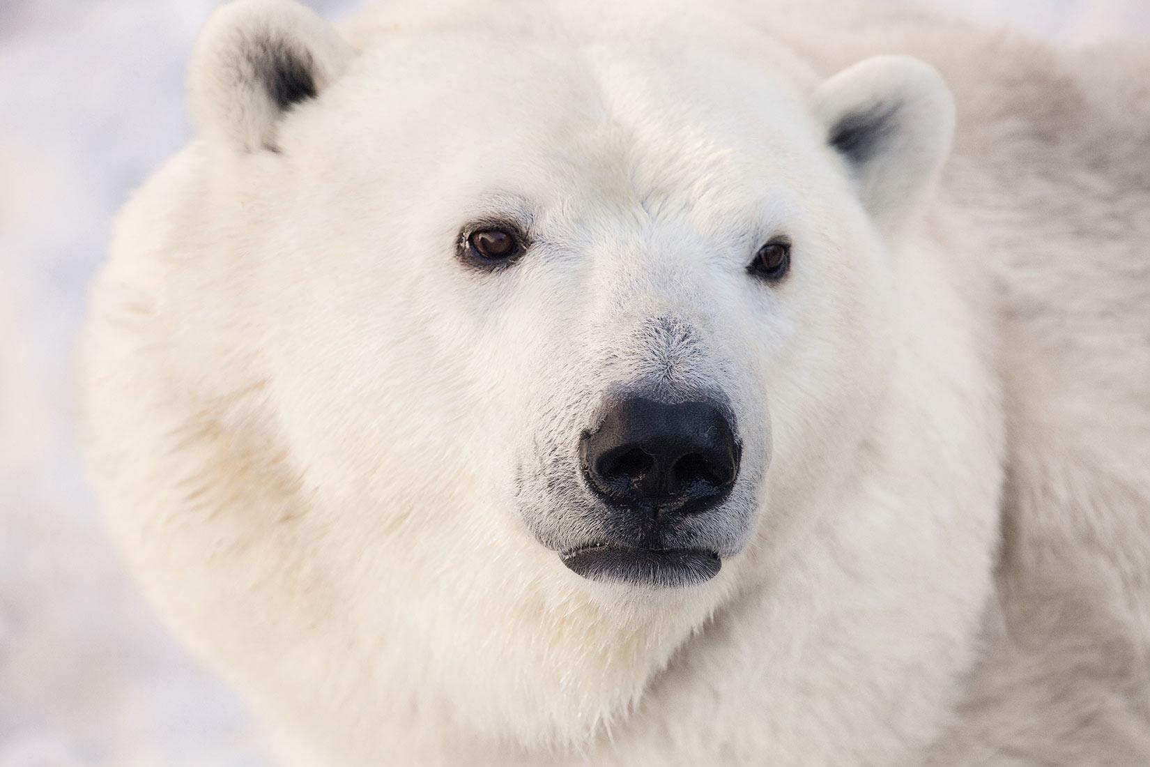 Arktis Reisen 2020