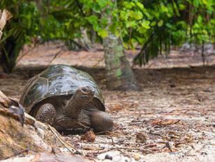 Seychellen und Aldabra-Atoll